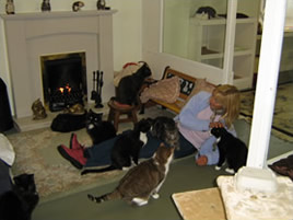 Photograph of the Retirement Home at Lincolnshire Trust for Cats